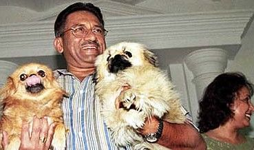 pervez and dogs