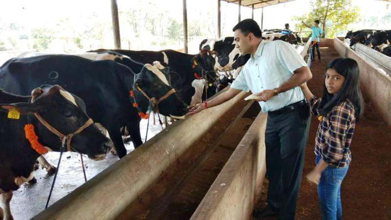 Pramod Sawant Feeding The Cows Along With His Daughter
