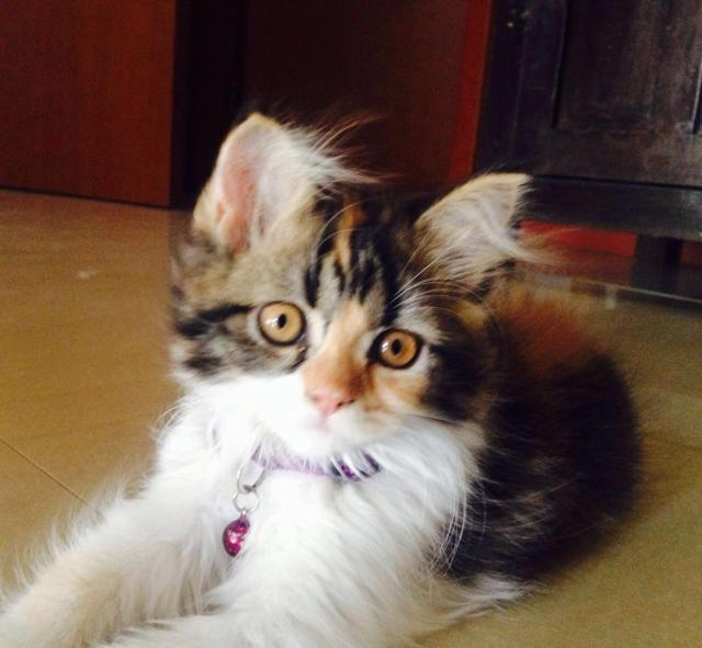 Richa Chadda's Pet Cat - Kamli