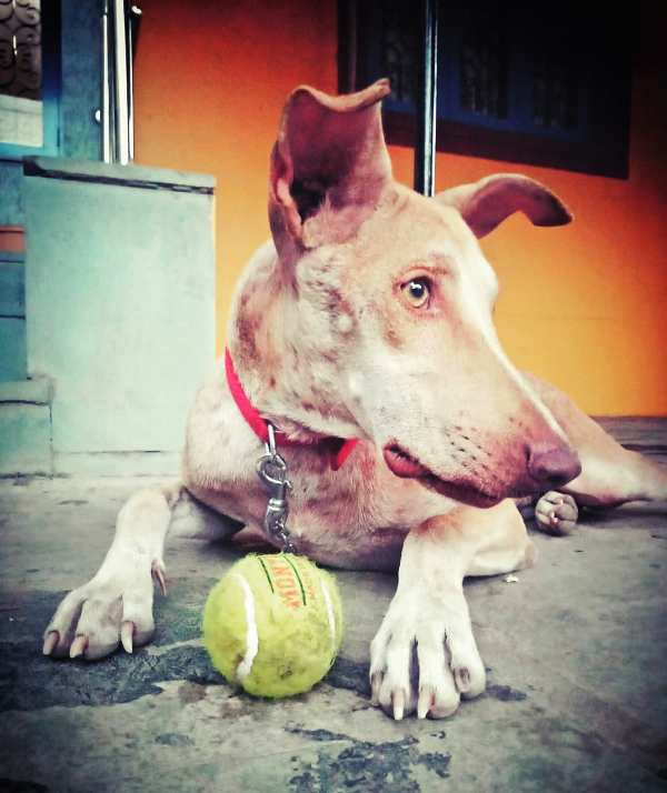 Parag Kanhere Pet Dog