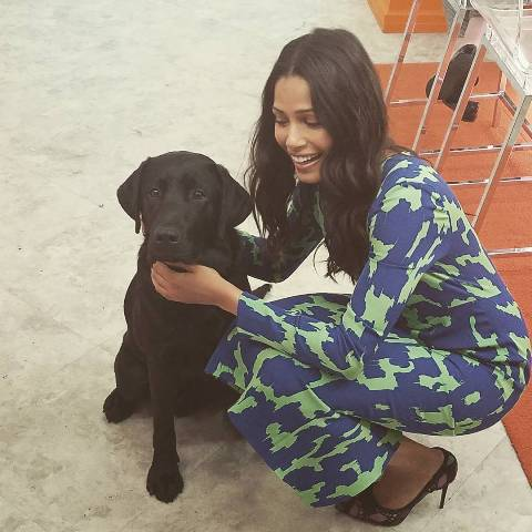 Freida Pinto loves dogs