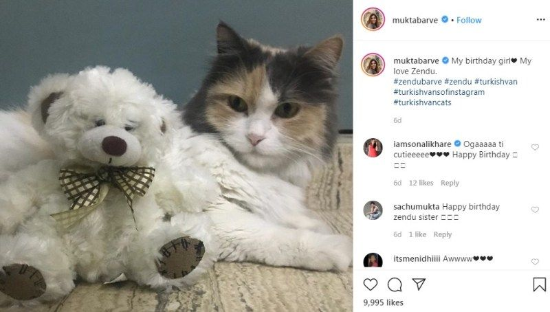 Mukta Barve's Post about her Pet Cat