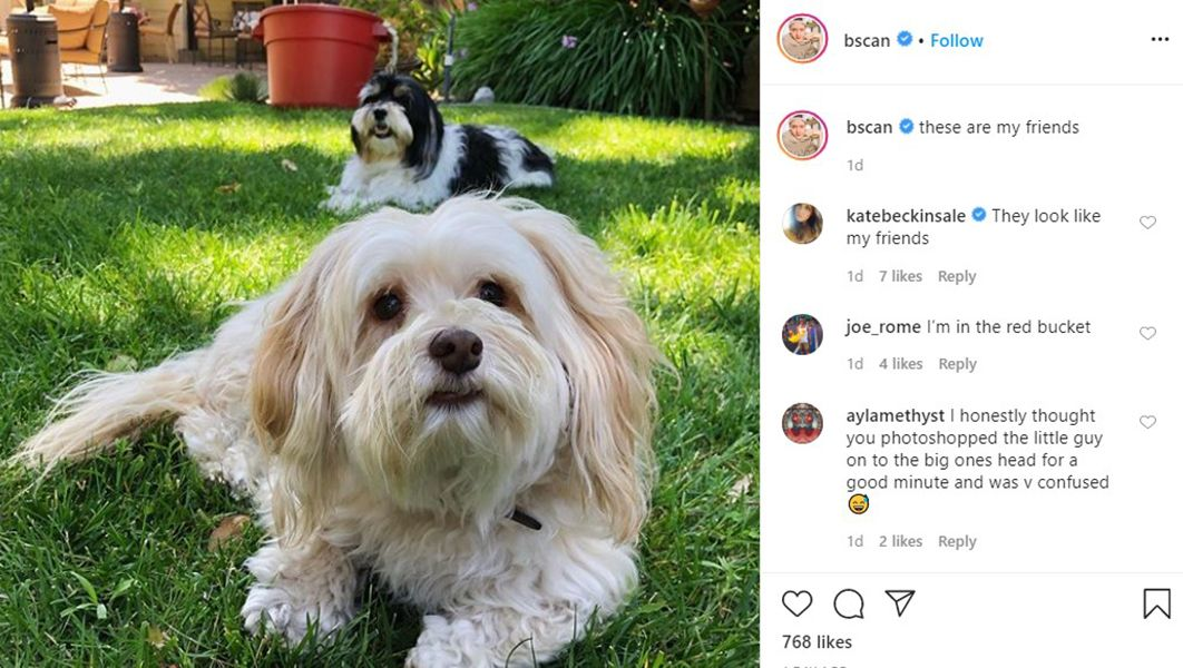 Brendan Scannell Talking about his Pets on his Instagram Account