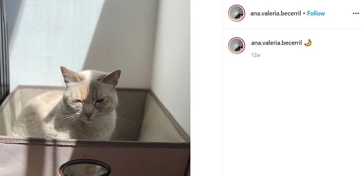 Instagram Bio of Ana Valeria Becerril Talking About her Cat