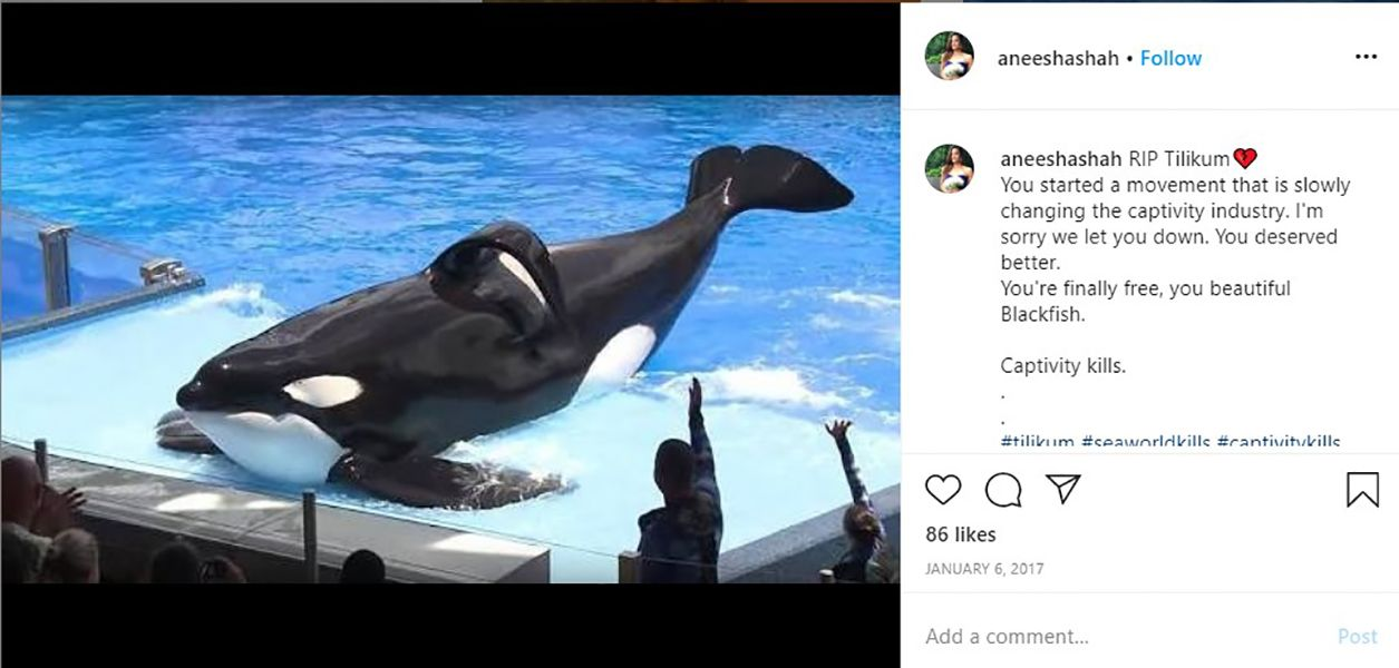 Instagram Post of Aneesha Shah Talking About Orca Whales