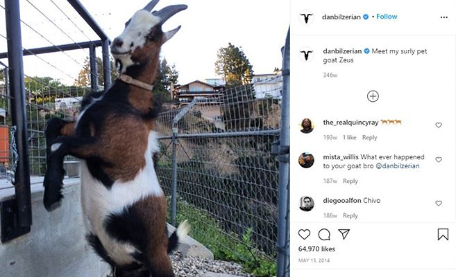 Dan Bilzerian Talking about his Pet Goat, Zeus