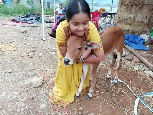Aditi Jaltare with a calf