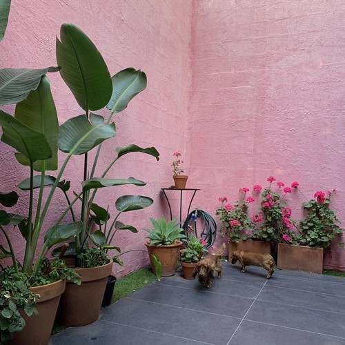 Ella Newton's plants in the backyard of her house