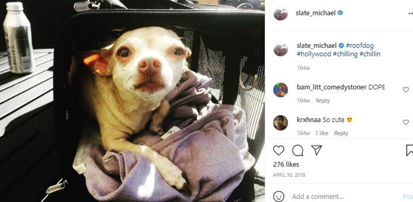 James Tyler talking about his pet dog in an Instagram post