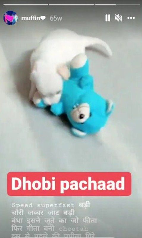 Rupesh Soni talking about his pet in an Insta story